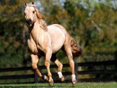 197392-horses-horse